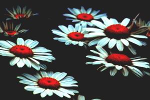Psychoflowers